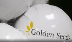 golden-seeds